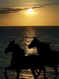 Sunset on the beach with horses. Horses are designed only with the silhouette. The background is a real photograph of the sea at sunset. Reflections of Royalty Free Stock Photography