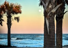 Sunset, Beach, Moon, Palm Tree, Sea Gulls in Coastal Tropical Florida on the Altantic royalty free stock photography