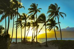 Sunset on the Beach with Ocean and Palm Trees in Maui Hawaii stock images