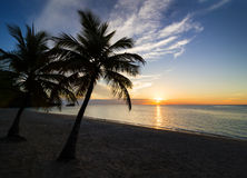 Sunset on the beach. Palm black outline during sunset on the beach Royalty Free Stock Photo