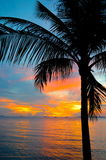 Sunset on the beach with palm tree Stock Photo