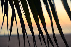 Sunset on the beach through palm tree leaves Royalty Free Stock Images