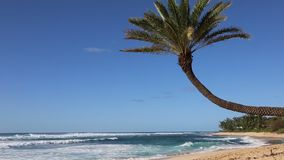 Sunset Beach with palm tree. Sunset Beach in North Shore, Oahu,  Hawaii stock video