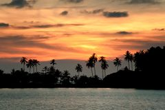 Sunset beach with palm trees Royalty Free Stock Photography