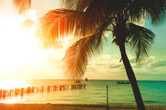 Sunset beach with palm trees and beautiful sky stock image
