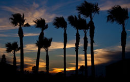 Sunset on beach with palm trees silhouette Royalty Free Stock Photos