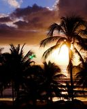 Sunset in the beach with palms royalty free stock image