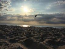Sunset on beach. Photo shows bird flying during sunset Stock Photo