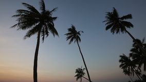 Sunset on beach at Phu Quoc island, Kien Giang province, Vietnam. Shadow of coconut trees swaying in the wind at dusk,  Phu Quoc island, Kien Giang province stock video footage