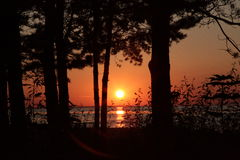 Sunset on the beach. Pines Stock Photography