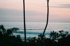 Sunset at beach with plants and palm tree royalty free stock photos