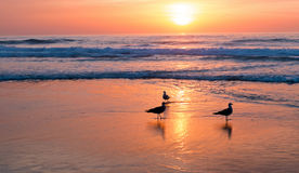 Sunset at the beach in Portugal Stock Image