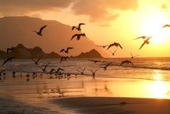 Sunset at the beach of Qalansiya on the island of Socotra Stock Photos