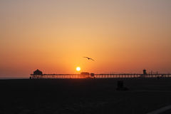 Sunset beach. The Seagull flying over the sunset beach Stock Photo