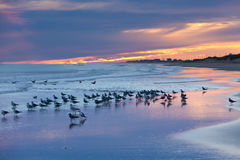 Free Sunset Beach Seagulls Outer Banks OBX NC USA Royalty Free Stock Images - 71026299