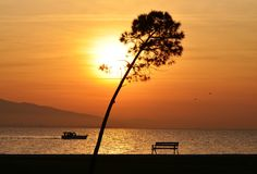 Sunset beach and tree Royalty Free Stock Image