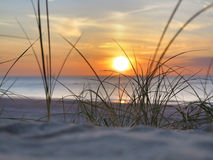 Sunset and beachgrass Royalty Free Stock Photos
