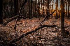 Sunset Beams Breaking Through a Hole in a Leaf of a Tree royalty free stock image