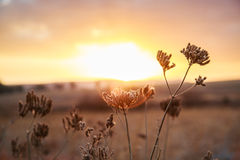Sunset. Beautiful sunset in the bush stock images
