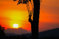 Sunset beautiful colorful landscape and silhouette tree in sky twilight time.  Stock Image