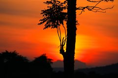 Sunset beautiful colorful landscape and silhouette tree in sky twilight time.  Stock Images