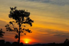 Sunset beautiful colorful landscape and silhouette tree in sky twilight time.  Stock Photo
