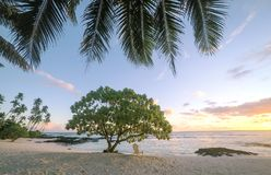 Sunset on beautiful empty tropical beach with deckchair and palm. Tree fronds at Lefaga, Matautu, Upolu Island, Western Samoa, South Pacific Royalty Free Stock Photography