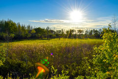 Sunset. Beautiful sunset on a field with a forest stock photography