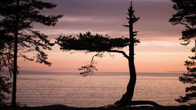 Sunset. Beautiful sunset in the forest. Gulf of Finland Royalty Free Stock Image