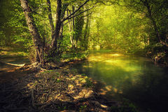 Sunset in the beautiful forest. Mountain river. Summer landscape Stock Photos