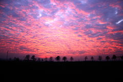 Sunset. Beautiful sunset with silhouettes of trees royalty free stock photos