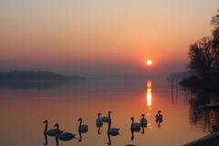 Sunset. Beautiful sunset with swans in Futog Stock Image