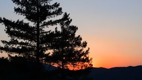 Sunset. Beautiful tree blowing in the wind at sunset stock video footage