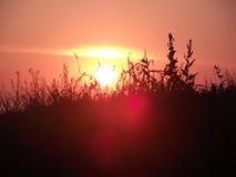 Sunset. Beautiful sunset on ukrainian field stock images