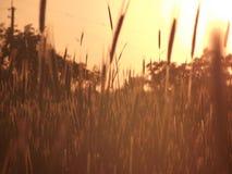 Sunset. Beautiful sunset in ukrainian village royalty free stock photo