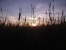 Sunset. Beautiful sunset in ukrainian village stock images