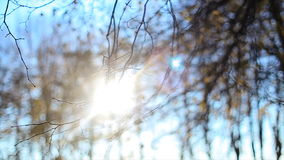 Sunset behind bare treetop in autumn stock footage
