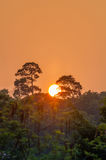 Sunset behind the big tree on evergreen forest Royalty Free Stock Photography