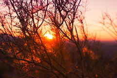 Sunset behind the branches Stock Image