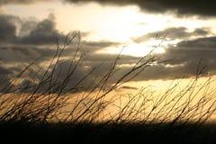 Sunset Behind Brush. A beautfifully illuminated sunset behind some weeds stock images