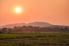 Sunset behind the cornfield Stock Photography