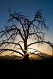 Sunset behind a dead tree Stock Photography