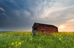 Sunset behind farmhouse on rapeseed field Stock Images