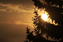 Sunset Behind the Fir-Tree Stock Image