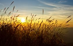 Sunset behind grass Royalty Free Stock Photography
