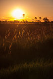 Sunset behind Grass and Trees in Africa Stock Image