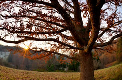 Sunset behind oak tree in mountains Royalty Free Stock Image