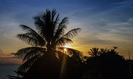 Sunset behind a palm Royalty Free Stock Images