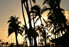 Sunset behind palm trees. The island of hawaii with the palm trees during sunset Stock Image