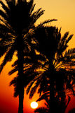 Sunset Behind Palm Trees Royalty Free Stock Image